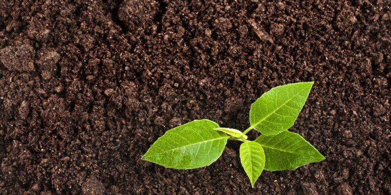 Растительный слой грунта