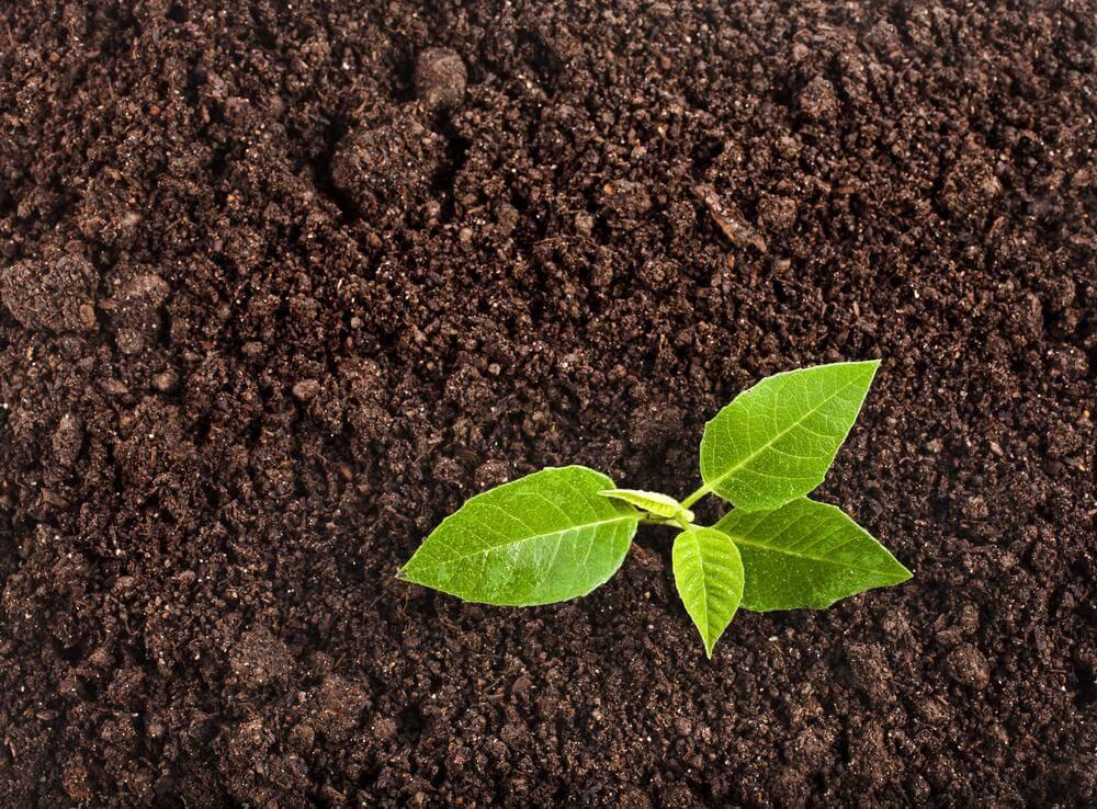 Растительный и сеяный грунт